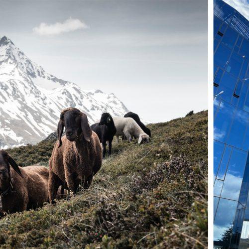 Tiroler Wolle statt Plastik – TirolWool® Responsive by Salewa